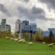 London. Canary Wharf skyscrapers and local farm with sheep on the green fields. Nature and modern life contrast — Stock Photo #68773559