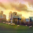 London. Canary Wharf skyscrapers and local farm with sheep on the green fields. Nature and modern life contrast — Stock Photo #68773735