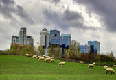 London. Canary Wharf skyscrapers and local farm with sheep on the green fields. Nature and modern life contrast — Foto de Stock