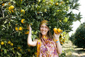 Pretty islam woman in orange grove smiling — Stock Photo