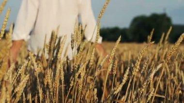 Man walking in wheat field — Stock Video
