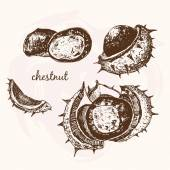 Sketch Chestnuts — Stock Vector