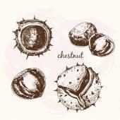 Sketch Chestnuts — Stock Vector