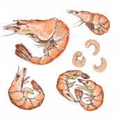 Shrimps set — Stock vektor