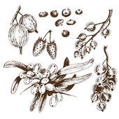 Berries collection.  — Stock Vector