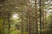 美しい緑の森 — ストック写真