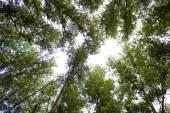 Green forest — Stok fotoğraf