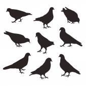 Uppsättning av en poserar duva fåglar, vektor silhuett. — Stockvektor