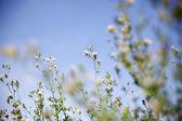 Spring awakening in the nature — Stock Photo