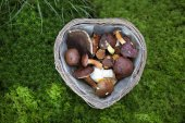 Collected mushroom in a basket — Stock Photo