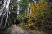 Sunny autumnal forest vs. ill and acidic forest — Stock Photo