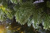 Closeup of a green Christmas tree — Stock Photo