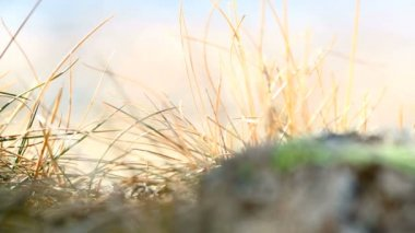 Closeup of grasses in the wind, part 1 — Stock Video