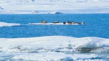 Seals swimming on an ice floe, part 1 — Stock Video