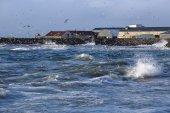 Gulls hunting for fish — Stock Photo