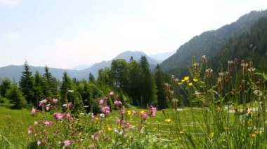 Mountain landscape in Bavarian Alps with colorful flowers in the foreground — Stock Video
