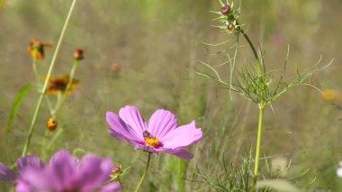 Wildflower meadow — Stock Video