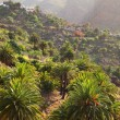 Masca village on the island of Tenerife — Stock Photo #56378649