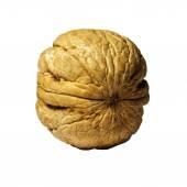 Walnut isolated — Stock Photo