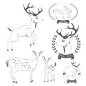 Set of vintage deer, emblems, labels, logo vector — Stock Vector