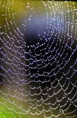 Cobweb after a light drizzle — Stock Photo
