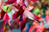 Foglie rosse d'autunno — Foto Stock