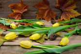 Yellow tulips with strobile — Stock Photo