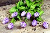 Purple and white tulips — Stock Photo