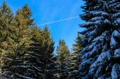 Winter forest with snow covered trees — Stock Photo