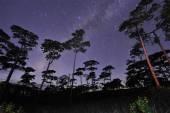 Beautiful night sky full of stars at pine tree forest Phu Soi Dao national park Uttaradit province Thailand — 图库照片