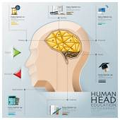 Human Head With Brain Three Dimension Polygon Education Infograp — Stock Vector