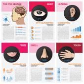 The Five Senses Chart Diagram Infographic — Stock Vector