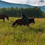 Rider on horseback at mountains — Stock Photo #59514939
