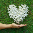 Hand with flowers shaped as heart — Stock Photo #51829619