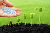 Hand giving chemical fertilizer to plants — Stock Photo