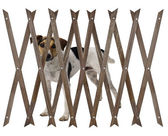 Dog behind a wooden fence — Stockfoto