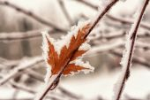 Hoar Frost on Leaf — Stock Photo