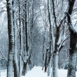 Winter footpath in the park under snow — Stock Photo #58197443