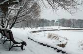 Tranquil winter morning in the park — 图库照片