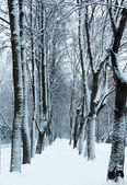 Winter footpath in the park under snow — 图库照片