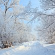 Winter landscape with road. — Stock Photo #63868127