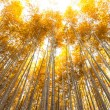 Постер, плакат: Bamboo grove bamboo forest at Arashiyama Kyoto Japan in autum