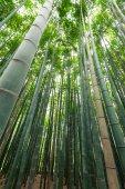 Bamboo grove, bamboo forest at Arashiyama, Kyoto, Japan — Stock Photo