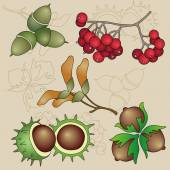 Autumn Fruits Vector Set — Stock Vector