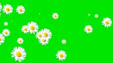 Green screen white flowers transition. — Stock Video