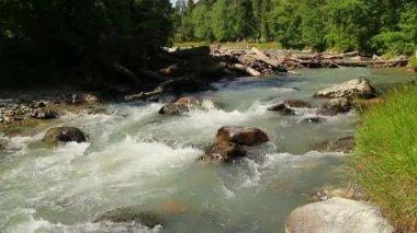 Large woody debris in mountain stream — Stock Video