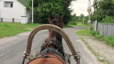 Harnessed horse driving wheel cart — Stock Video