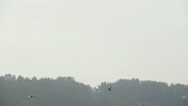 Seagulls flying above water — Vídeo de stock