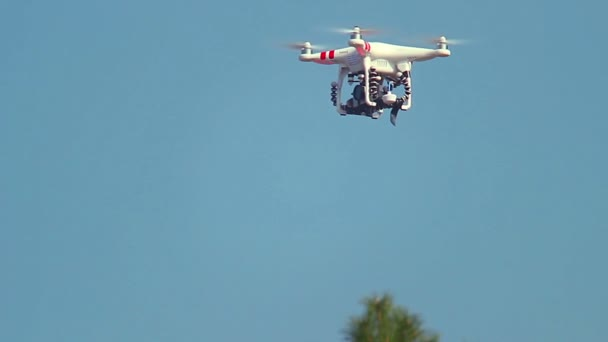 Quadcopter flying in forest — Vidéo