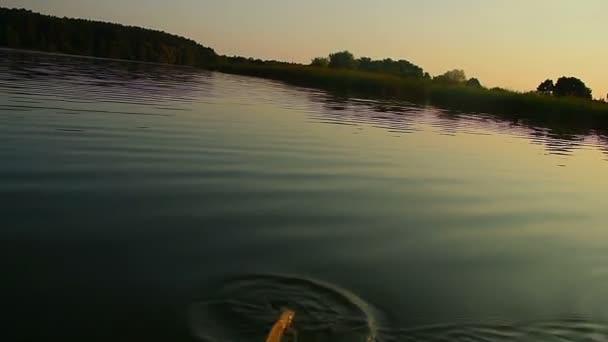 Person kayaking on river — Vidéo